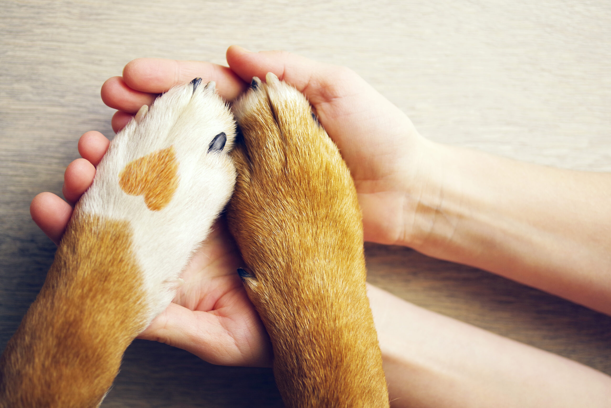 Keep Your Furry Friend Covered With The Best Pet Insurance